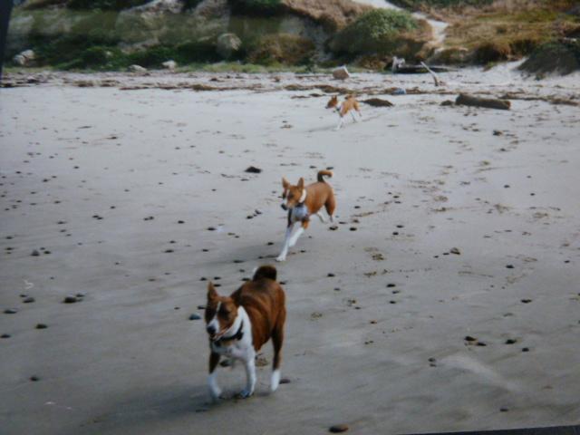Willie, Rocky, Bella on beach